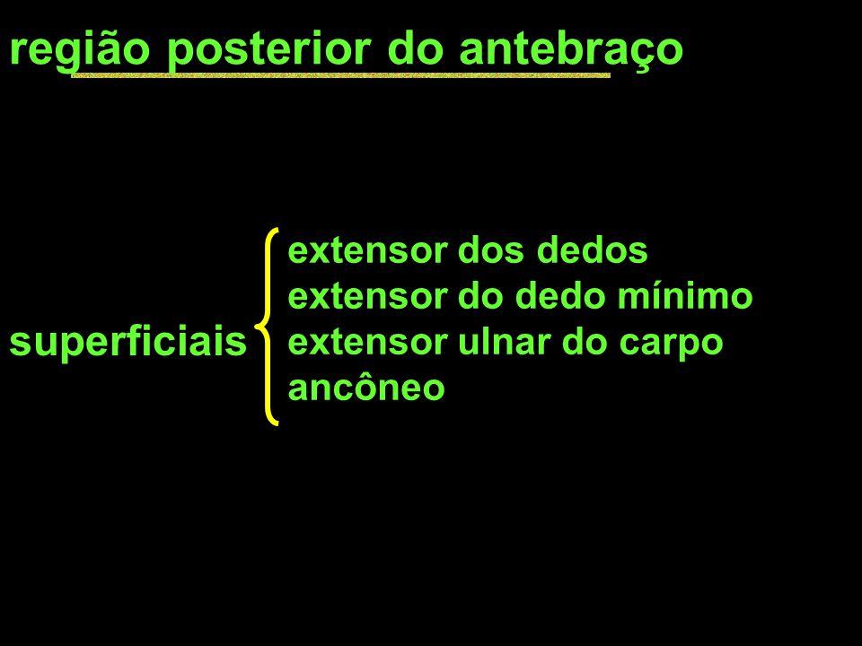 região posterior do antebraço superficiais extensor dos dedos extensor do dedo mínimo extensor ulnar do carpo ancôneo