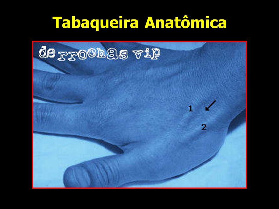Músculos da Mão Não há músculos na região dorsal Região palmar – 3 partes: Tenar – raiz do polegar Hipotenar – medial da mão (cilíndrica) Média – depressão, entre as duas Não há músculos na região dorsal Região palmar – 3 partes: Tenar – raiz do polegar Hipotenar – medial da mão (cilíndrica) Média – depressão, entre as duas