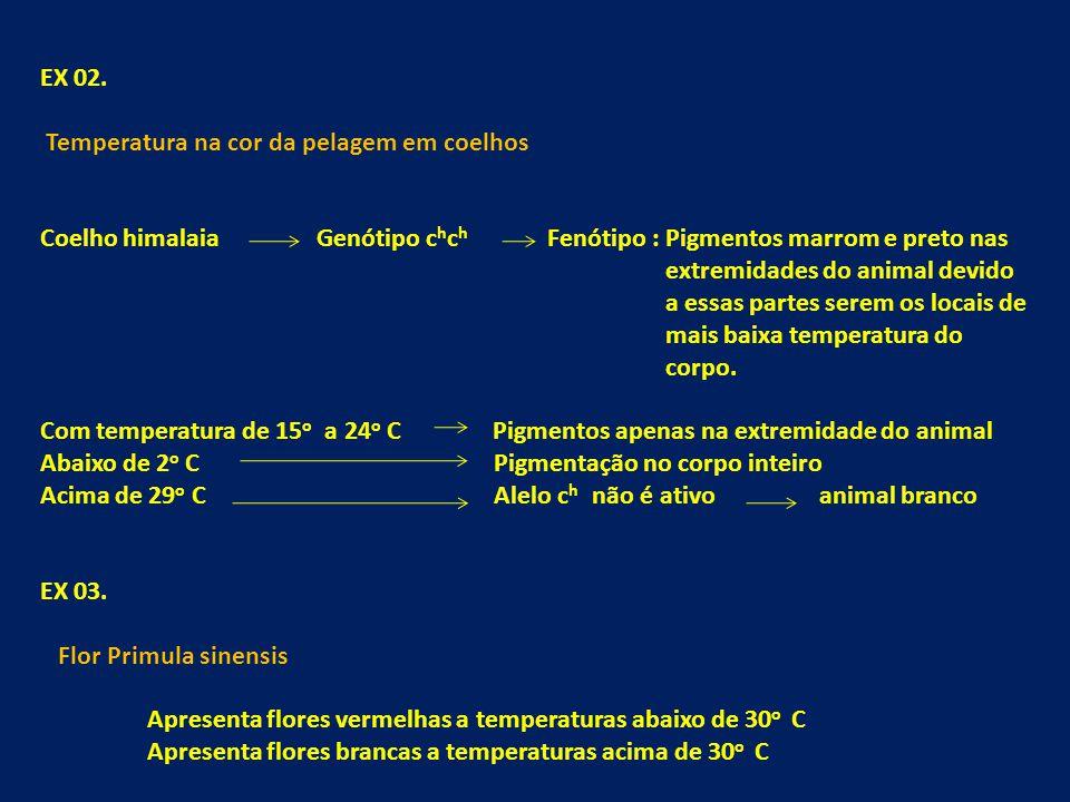 EX 02. Temperatura na cor da pelagem em coelhos Coelho himalaia Genótipo c h c h Fenótipo : Pigmentos marrom e preto nas extremidades do animal devido