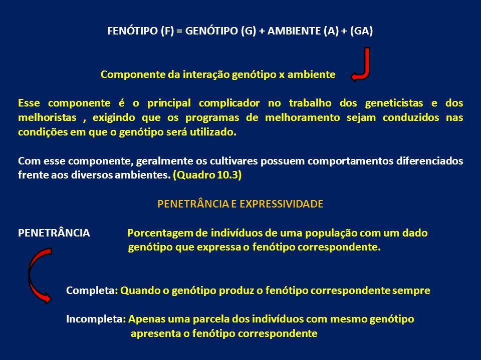 FENÓTIPO (F) = GENÓTIPO (G) + AMBIENTE (A) + (GA) Componente da interação genótipo x ambiente Esse componente é o principal complicador no trabalho do