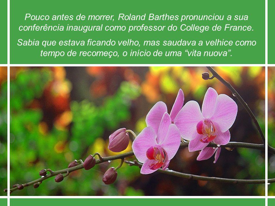 A Alegria Rubem Alves Imagens de João Parassu