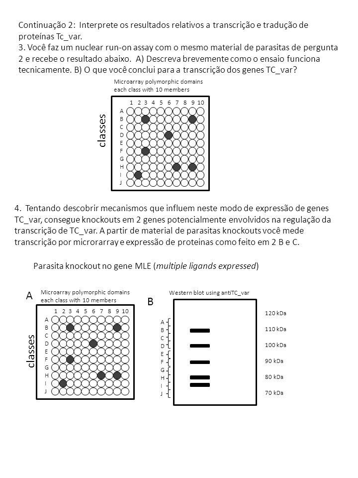 1 2 3 4 5 6 7 8 9 10 ABCDEFGHIJABCDEFGHIJ ABCDEFGHIJABCDEFGHIJ Microarray polymorphic domains each class with 10 members Western blot using antiTC_var CD 120 kDa 110 kDa 100 kDa 90 kDa 80 kDa 70 kDa Parasita knockout no gene CAP1 (chromatin associated protein 1) A partir dos resultados 4 A-D, sugira uma função para MLE e CAP1.
