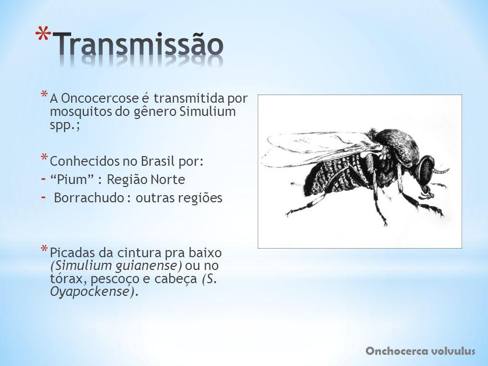 * A Oncocercose é transmitida por mosquitos do gênero Simulium spp.; * Conhecidos no Brasil por: - Pium : Região Norte - Borrachudo : outras regiões *