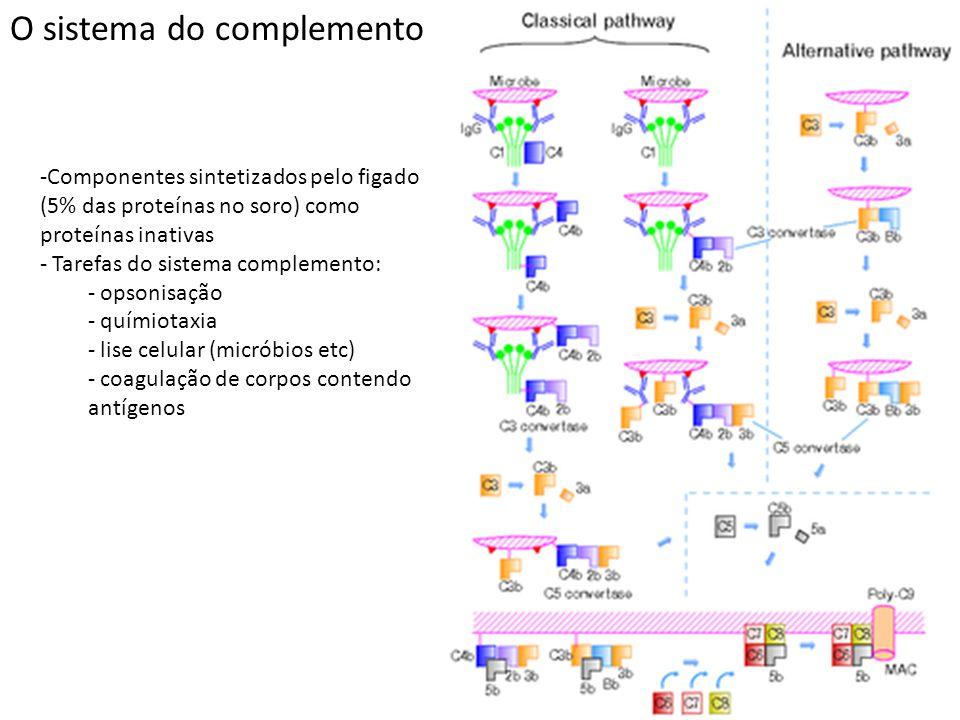 O sistema do complemento -Componentes sintetizados pelo figado (5% das proteínas no soro) como proteínas inativas - Tarefas do sistema complemento: -