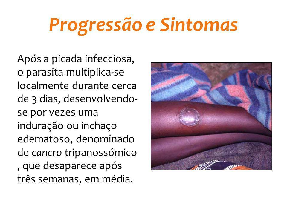 Progressão e Sintomas Após a picada infecciosa, o parasita multiplica-se localmente durante cerca de 3 dias, desenvolvendo- se por vezes uma induração