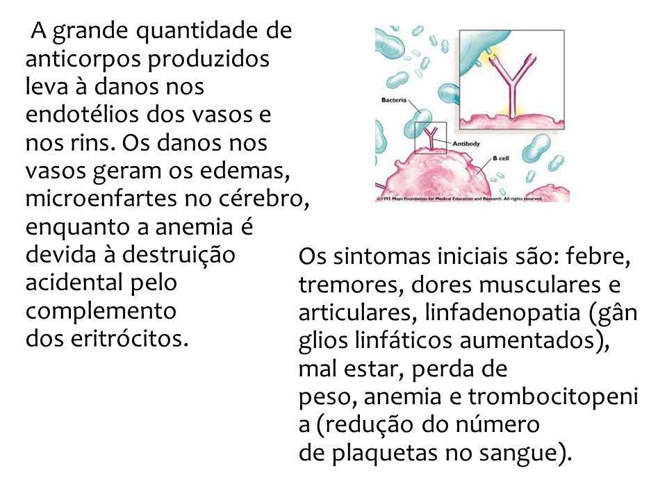 A grande quantidade de anticorpos produzidos leva à danos nos endotélios dos vasos e nos rins. Os danos nos vasos geram os edemas, microenfartes no cé