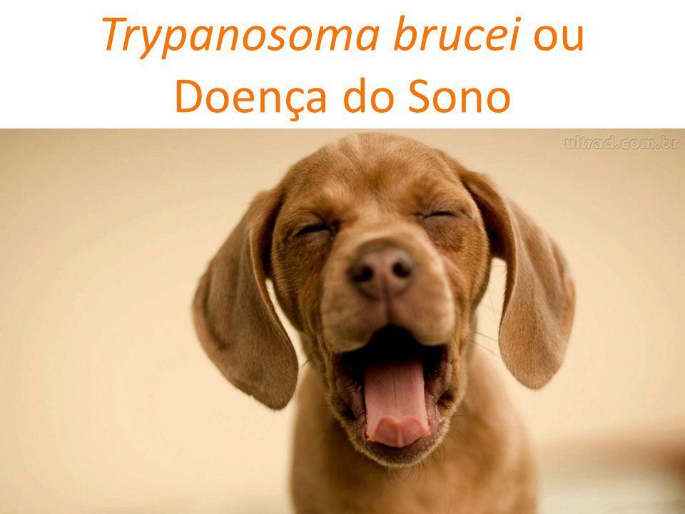Trypanosoma brucei ou Doença do Sono