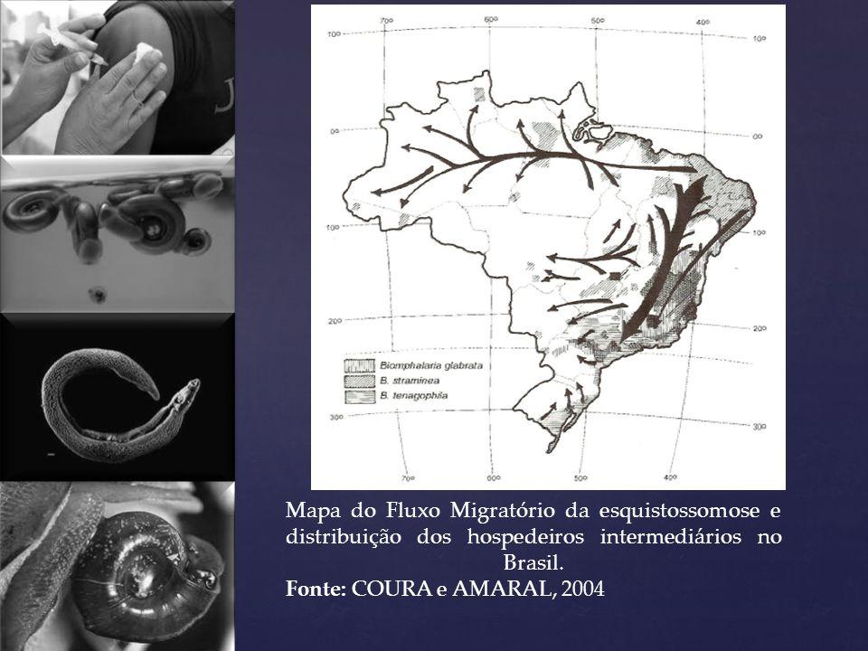 Mapa do Fluxo Migratório da esquistossomose e distribuição dos hospedeiros intermediários no Brasil. Fonte: COURA e AMARAL, 2004