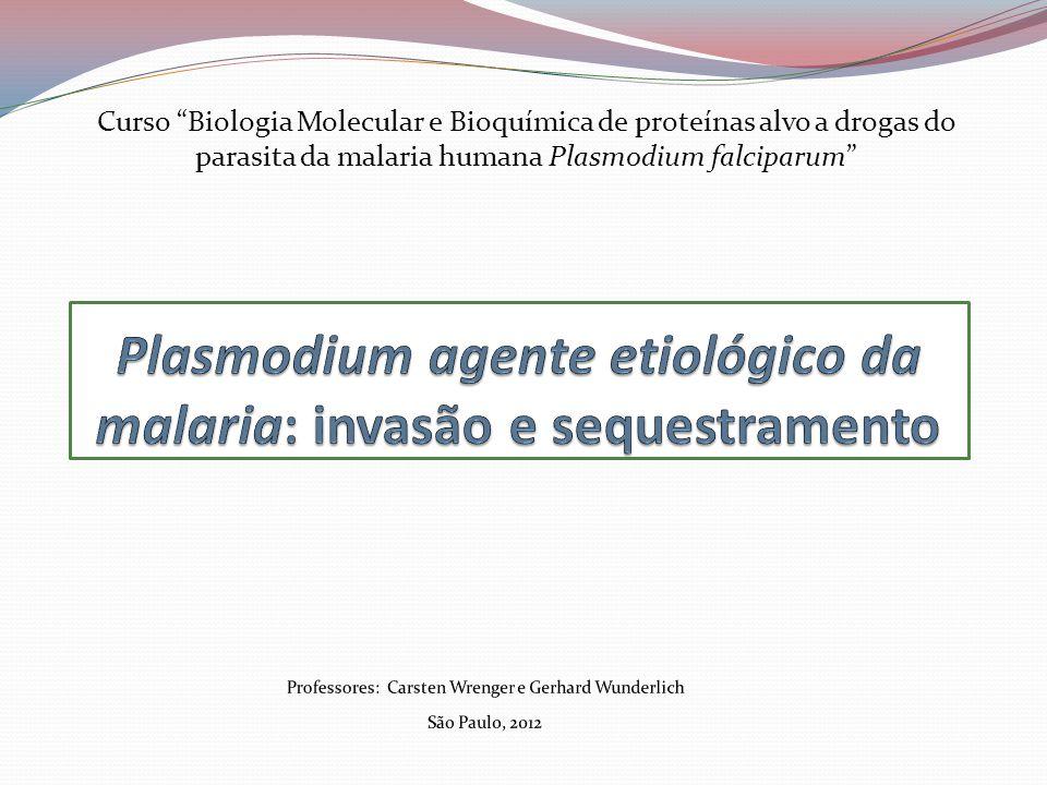 Curso Biologia Molecular e Bioquímica de proteínas alvo a drogas do parasita da malaria humana Plasmodium falciparum