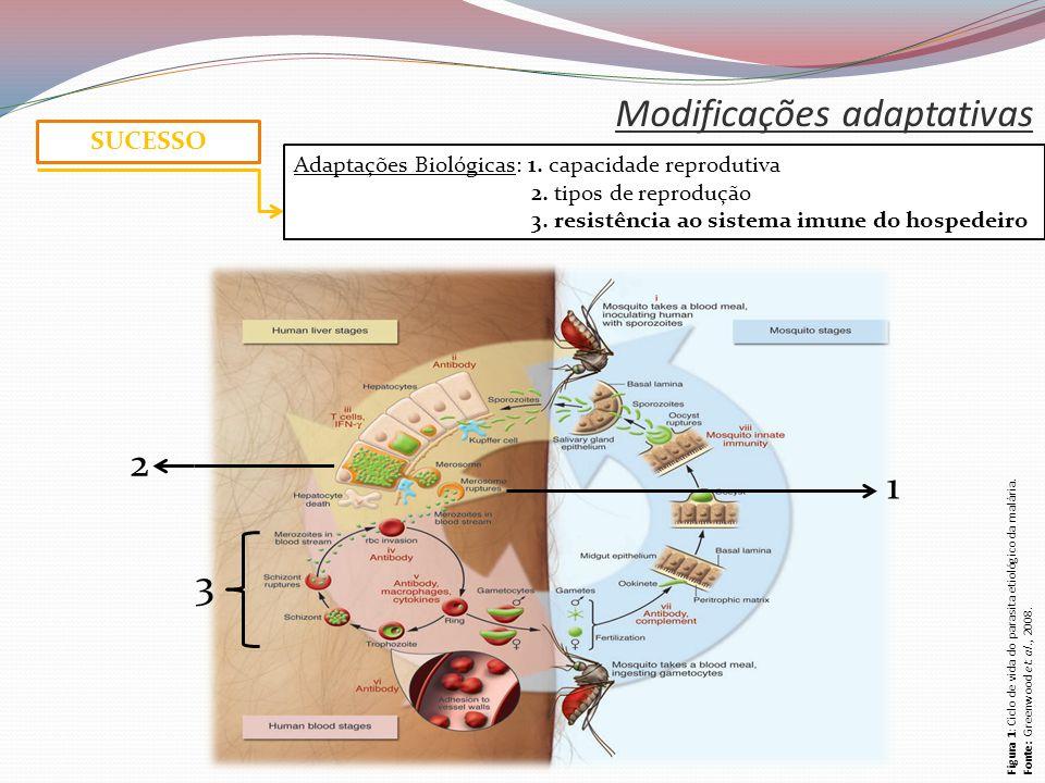 Modificações adaptativas SUCESSO Adaptações Biológicas: 1.