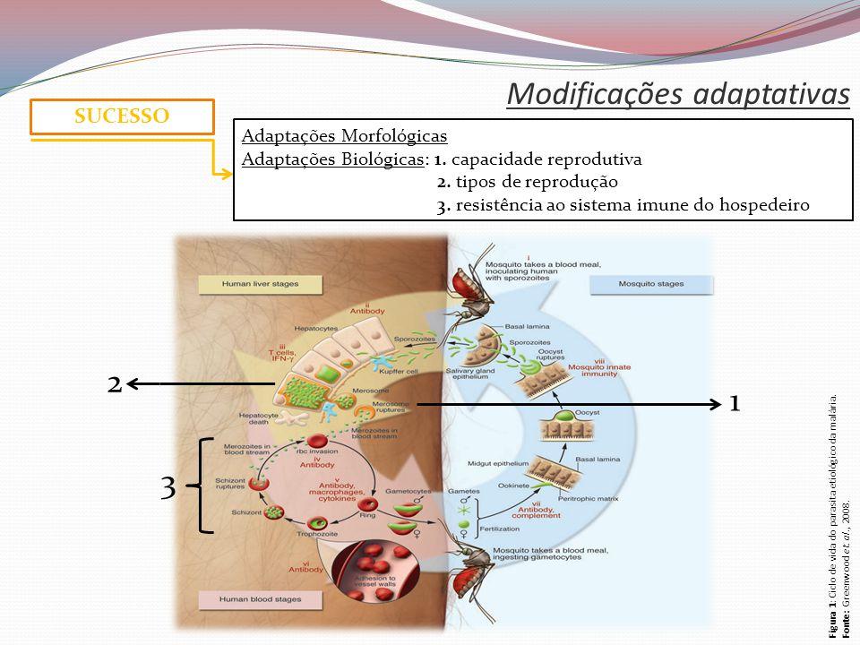 Modificações adaptativas SUCESSO Adaptações Morfológicas Adaptações Biológicas: 1.