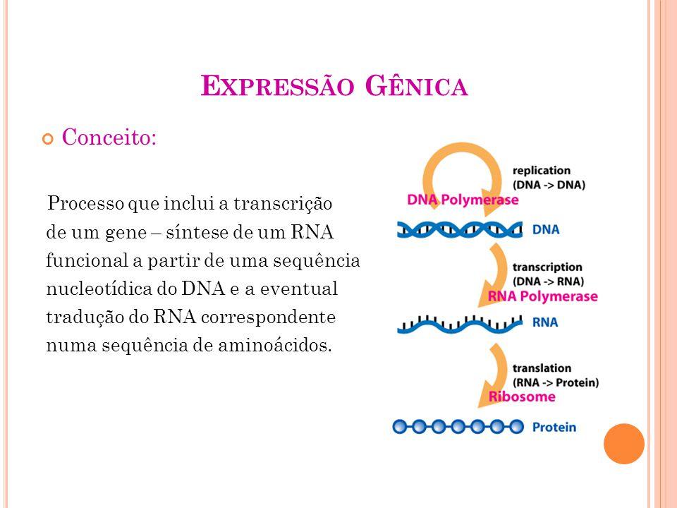 GENE PROCARIÓTICO Gene = toda sequência nucleotídica necessária e suficiente para síntese de um polipeptídeo ou uma molécula de RNA estável; Região codificadora Sequências nucletídicas reguladoras -promotor -terminador -operador -UAS