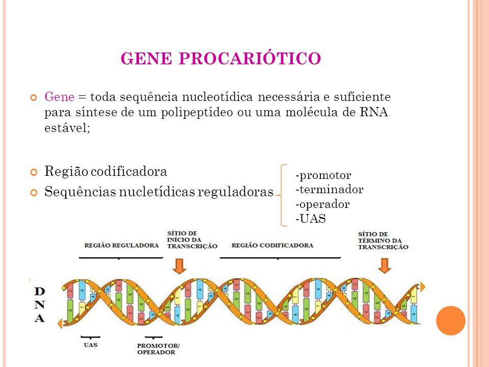 P RINCÍPIOS GERAIS DA REGULAÇÃO GÊNICA Expressão gênica constitutiva e regulada 1) Expressão gênica constitutiva genes que codificam produtos que são exigidos a todo momento 2) Expressão gênica regulada genes que codificam produtos em resposta a sinais moleculares - indução - repressão