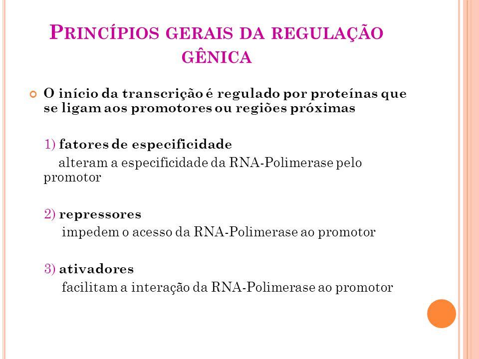 P RINCÍPIOS GERAIS DA REGULAÇÃO GÊNICA O início da transcrição é regulado por proteínas que se ligam aos promotores ou regiões próximas 1) fatores de especificidade alteram a especificidade da RNA-Polimerase pelo promotor 2) repressores impedem o acesso da RNA-Polimerase ao promotor 3) ativadores facilitam a interação da RNA-Polimerase ao promotor