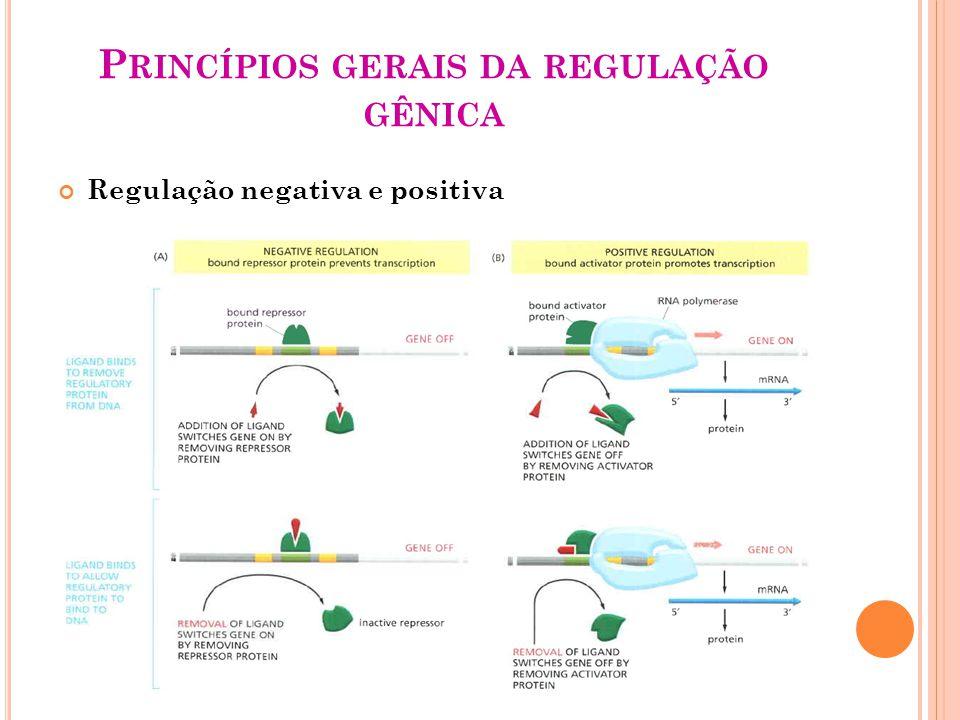 P RINCÍPIOS GERAIS DA REGULAÇÃO GÊNICA Regulação negativa e positiva