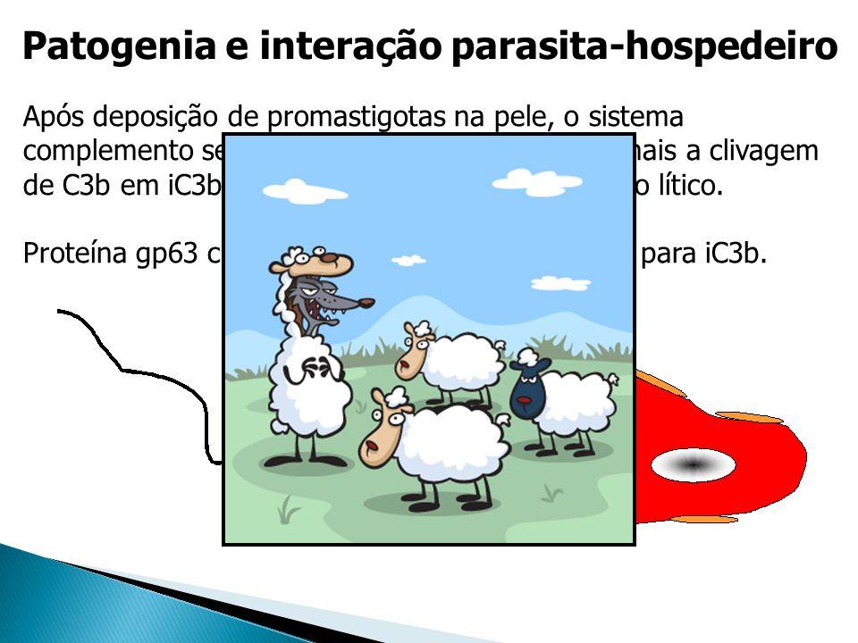 Patogenia e interação parasita-hospedeiro Após deposição de promastigotas na pele, o sistema complemento se liga na superfície do parasita, mais a cli