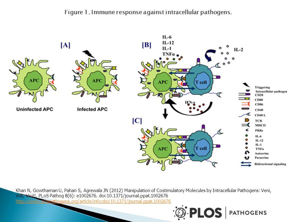 Figure 1. Immune response against intracellular pathogens. Khan N, Gowthaman U, Pahari S, Agrewala JN (2012) Manipulation of Costimulatory Molecules b