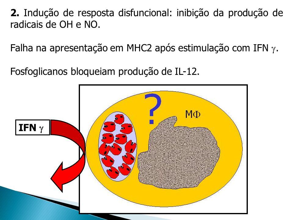 2. Indução de resposta disfuncional: inibição da produção de radicais de OH e NO. Falha na apresentação em MHC2 após estimulação com IFN. Fosfoglicano