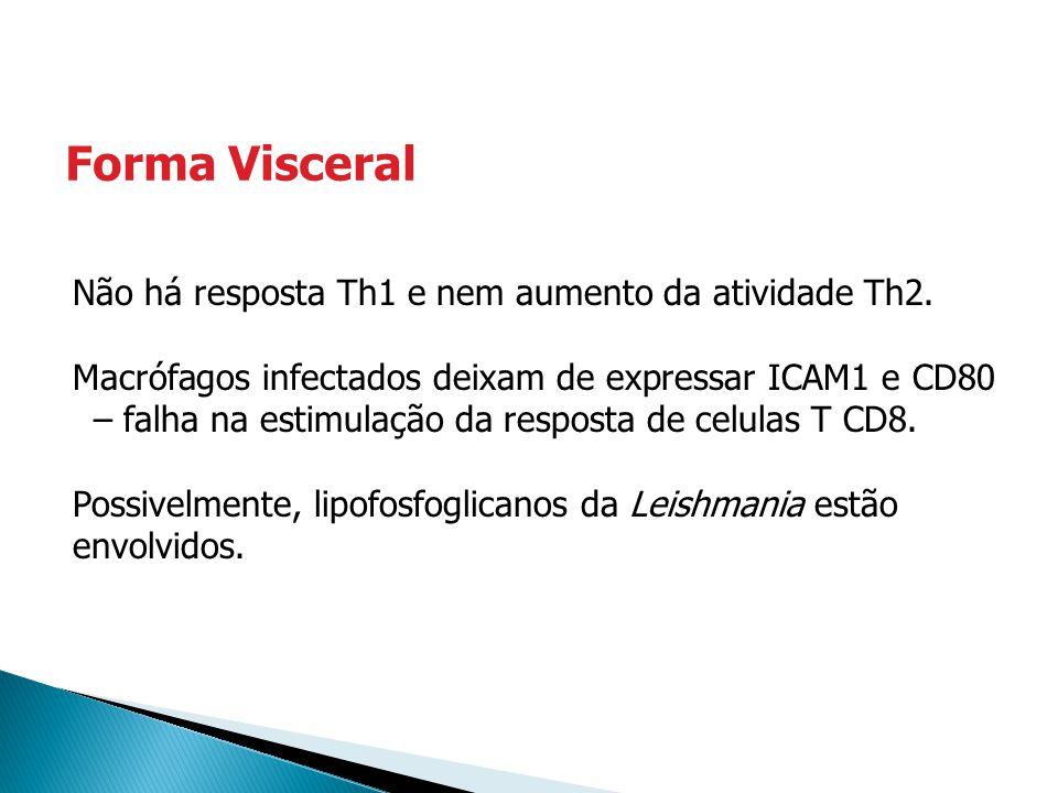 Não há resposta Th1 e nem aumento da atividade Th2. Macrófagos infectados deixam de expressar ICAM1 e CD80 – falha na estimulação da resposta de celul