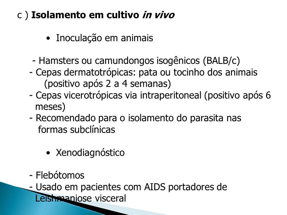c ) Isolamento em cultivo in vivo Inoculação em animais - Hamsters ou camundongos isogênicos (BALB/c) - Cepas dermatotrópicas: pata ou tocinho dos ani