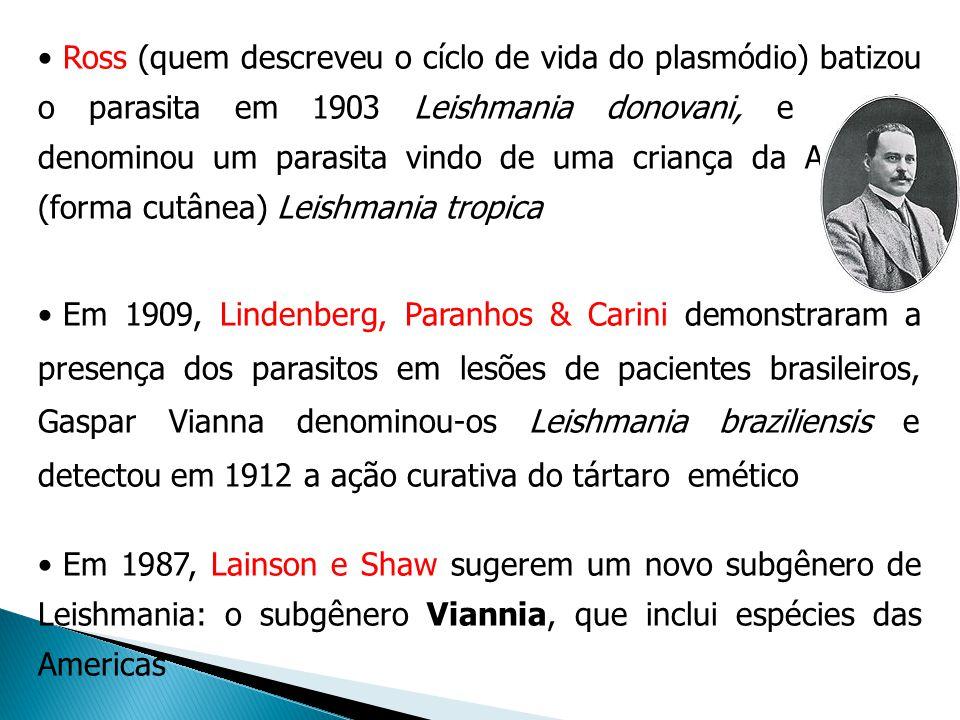 Ross (quem descreveu o cíclo de vida do plasmódio) batizou o parasita em 1903 Leishmania donovani, e Wright denominou um parasita vindo de uma criança