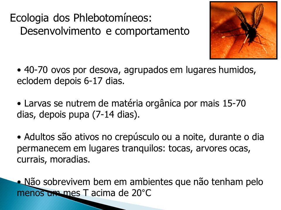 Ecologia dos Phlebotomíneos: Desenvolvimento e comportamento 40-70 ovos por desova, agrupados em lugares humidos, eclodem depois 6-17 dias. Larvas se