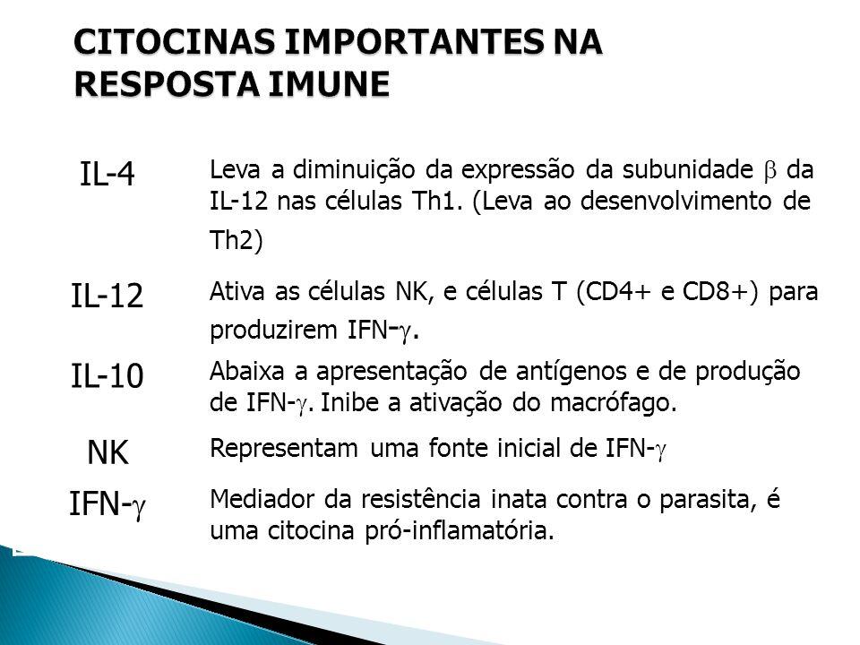IL-4 Leva a diminuição da expressão da subunidade da IL-12 nas células Th1. (Leva ao desenvolvimento de Th2) IL-12 Ativa as células NK, e células T (C