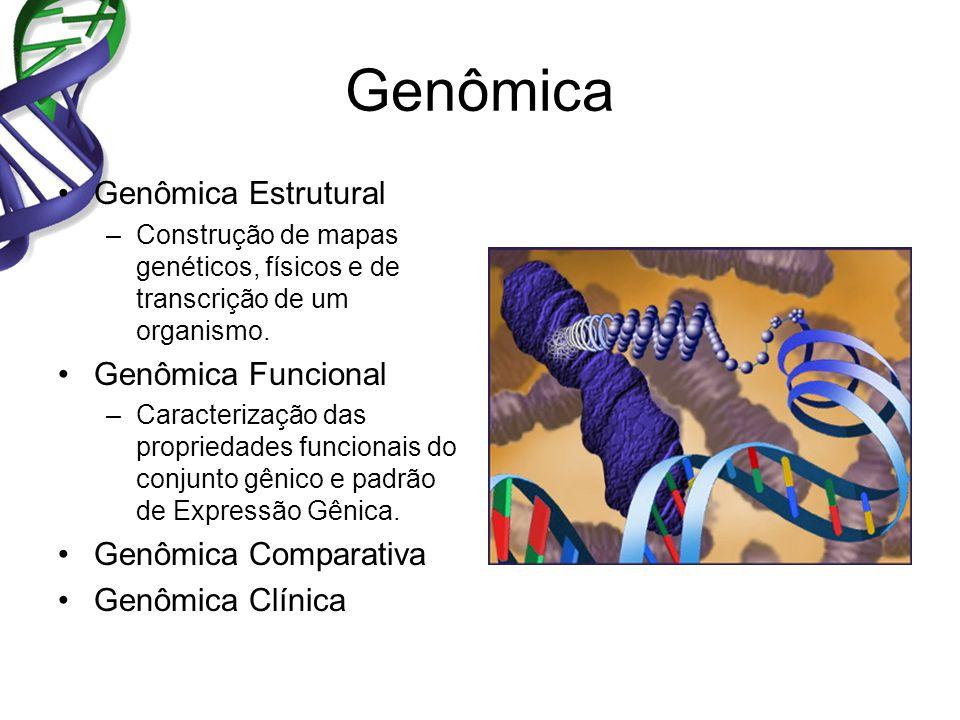 Genômica Genômica Estrutural –Construção de mapas genéticos, físicos e de transcrição de um organismo. Genômica Funcional –Caracterização das propried