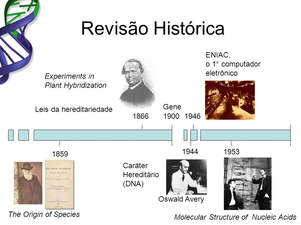 Revisão Histórica The Origin of Species Experiments in Plant Hybridization Molecular Structure of Nucleic Acids 1859 1866 1953 1946 ENIAC, o 1° computador eletrônico 1944 Caráter Hereditário (DNA) Oswald Avery Leis da hereditariedade 1900 Gene