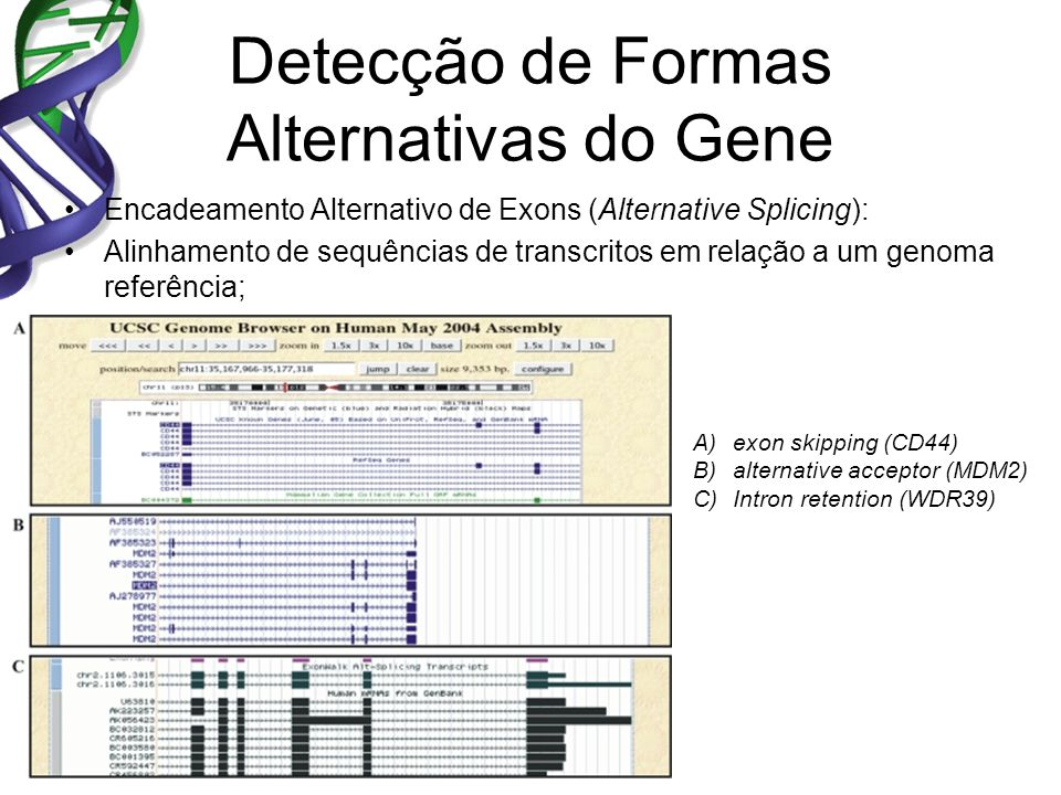 Detecção de Formas Alternativas do Gene Encadeamento Alternativo de Exons (Alternative Splicing): Alinhamento de sequências de transcritos em relação a um genoma referência; A)exon skipping (CD44) B)alternative acceptor (MDM2) C)Intron retention (WDR39)