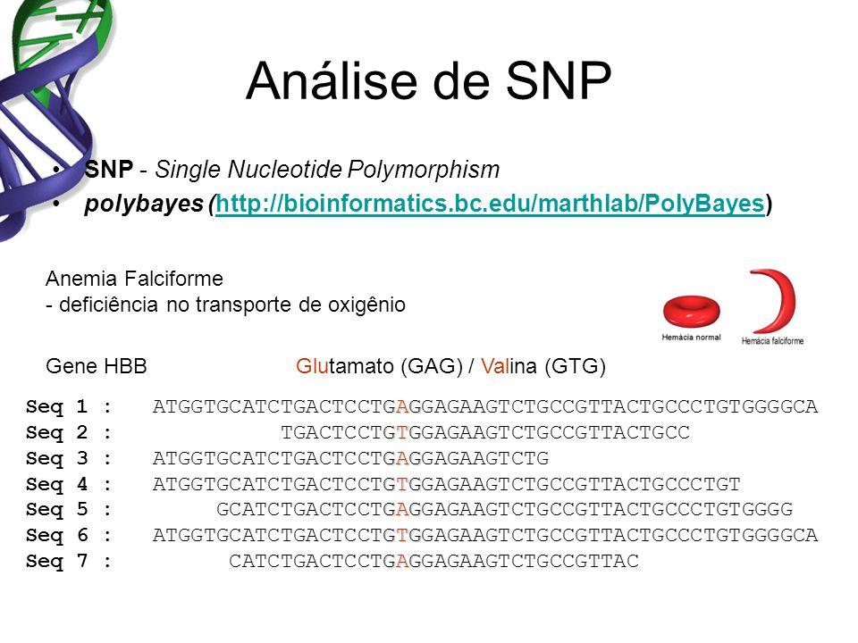 Análise de SNP SNP - Single Nucleotide Polymorphism polybayes (http://bioinformatics.bc.edu/marthlab/PolyBayes)http://bioinformatics.bc.edu/marthlab/PolyBayes GAG ATGGTGCATCTGACTCCTGAGGAGAAGTCTGCCGTTACTGCCCTGTGGGGCA GTG TGACTCCTGTGGAGAAGTCTGCCGTTACTGCC GAG ATGGTGCATCTGACTCCTGAGGAGAAGTCTG GTG ATGGTGCATCTGACTCCTGTGGAGAAGTCTGCCGTTACTGCCCTGT GAG GCATCTGACTCCTGAGGAGAAGTCTGCCGTTACTGCCCTGTGGGG GTG ATGGTGCATCTGACTCCTGTGGAGAAGTCTGCCGTTACTGCCCTGTGGGGCA GAG CATCTGACTCCTGAGGAGAAGTCTGCCGTTAC Seq 1 : Seq 2 : Seq 3 : Seq 4 : Seq 5 : Seq 6 : Seq 7 : Anemia Falciforme - deficiência no transporte de oxigênio Glutamato (GAG) / Valina (GTG)Gene HBB