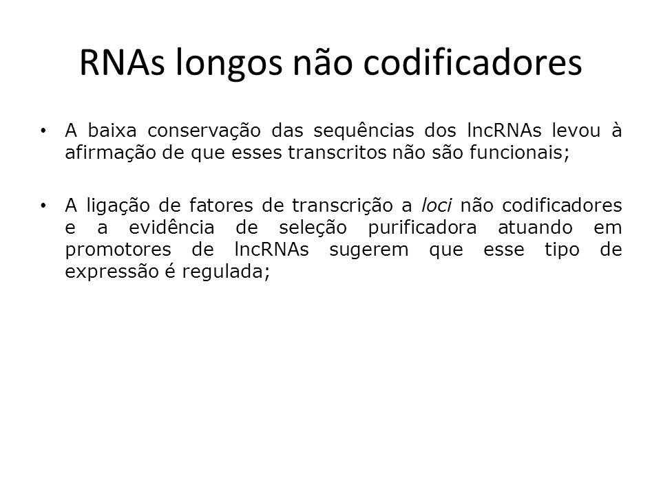 RNAs longos não codificadores Porém: – Na realidade, vários lncRNAs conhecidos detêm um grau de conservação, sendo a função de vários deles conhecida; – lncRNAs podem exibir trechos de sequências conservadas mais curtas do que aquelas presentes em transcritos codificadores de proteínas (Xist); – A ausência de conservação pode ser indício de altas taxas de evolução das sequências primárias dos lncRNAs, caso essas sequências apresentem maior plasticidade em relação à sua estrutura/função (HAR1);