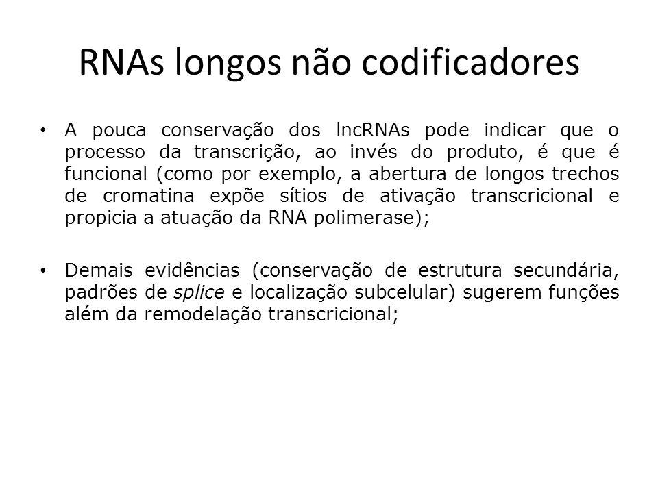 RNAs longos não codificadores A pouca conservação dos lncRNAs pode indicar que o processo da transcrição, ao invés do produto, é que é funcional (como por exemplo, a abertura de longos trechos de cromatina expõe sítios de ativação transcricional e propicia a atuação da RNA polimerase); Demais evidências (conservação de estrutura secundária, padrões de splice e localização subcelular) sugerem funções além da remodelação transcricional;