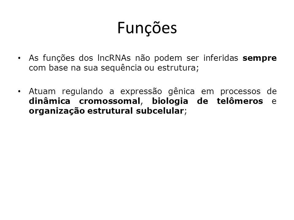 Funções As funções dos lncRNAs não podem ser inferidas sempre com base na sua sequência ou estrutura; Atuam regulando a expressão gênica em processos de dinâmica cromossomal, biologia de telômeros e organização estrutural subcelular;