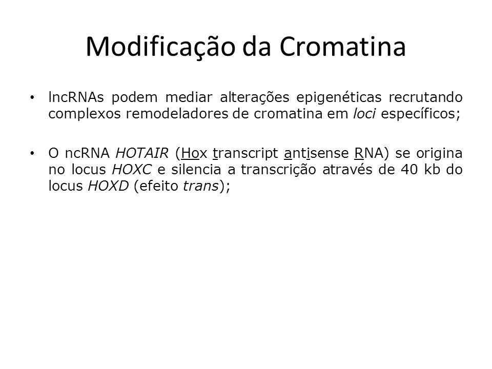 Modificação da Cromatina lncRNAs podem mediar alterações epigenéticas recrutando complexos remodeladores de cromatina em loci específicos; O ncRNA HOTAIR (Hox transcript antisense RNA) se origina no locus HOXC e silencia a transcrição através de 40 kb do locus HOXD (efeito trans);