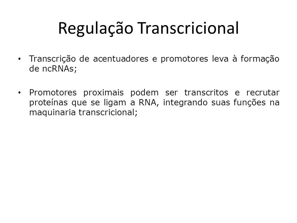 Regulação Transcricional Transcrição de acentuadores e promotores leva à formação de ncRNAs; Promotores proximais podem ser transcritos e recrutar proteínas que se ligam a RNA, integrando suas funções na maquinaria transcricional;