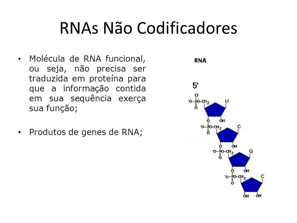 RNAs Não Codificadores Molécula de RNA funcional, ou seja, não precisa ser traduzida em proteína para que a informação contida em sua sequência exerça sua função; Produtos de genes de RNA;