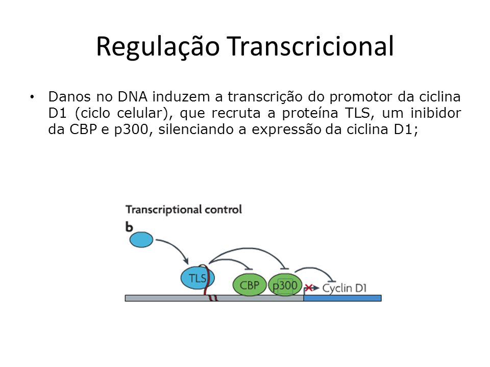Regulação Transcricional Danos no DNA induzem a transcrição do promotor da ciclina D1 (ciclo celular), que recruta a proteína TLS, um inibidor da CBP e p300, silenciando a expressão da ciclina D1;