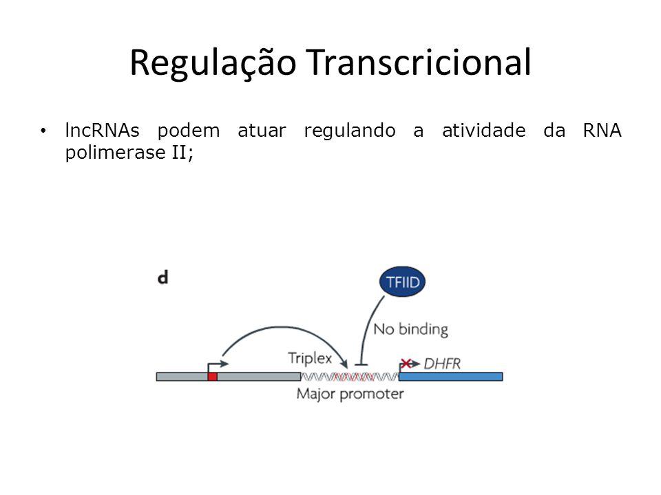 Regulação Transcricional Um transcrito formado em uma região upstream do locus DHFR forma um triplex na região promotora e impede a ligação do cofator TF II D;