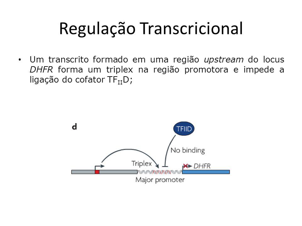 Regulação Pós-Transcricional A capacidade dos lncRNAs de reconhecer sequências complementares permite interações específicas durante o processamento de mRNAs, como splice, edição, transporte, tradução e degradação; O lncRNA antisenso Zeb2 complementa o sítio de splice 5 UTR do dedo de zinco (zinc finger) Hox mRNA Zeb2, prevenindo o splice de um intron necessário à tradução desse mRNA;