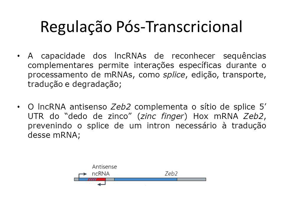 Regulação Pós-Transcricional