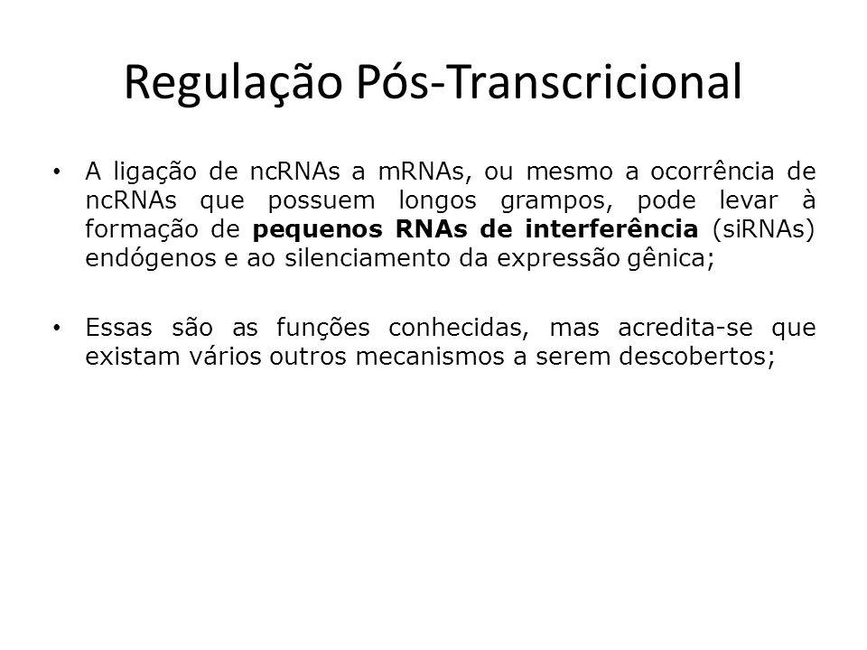 A ligação de ncRNAs a mRNAs, ou mesmo a ocorrência de ncRNAs que possuem longos grampos, pode levar à formação de pequenos RNAs de interferência (siRNAs) endógenos e ao silenciamento da expressão gênica; Essas são as funções conhecidas, mas acredita-se que existam vários outros mecanismos a serem descobertos;