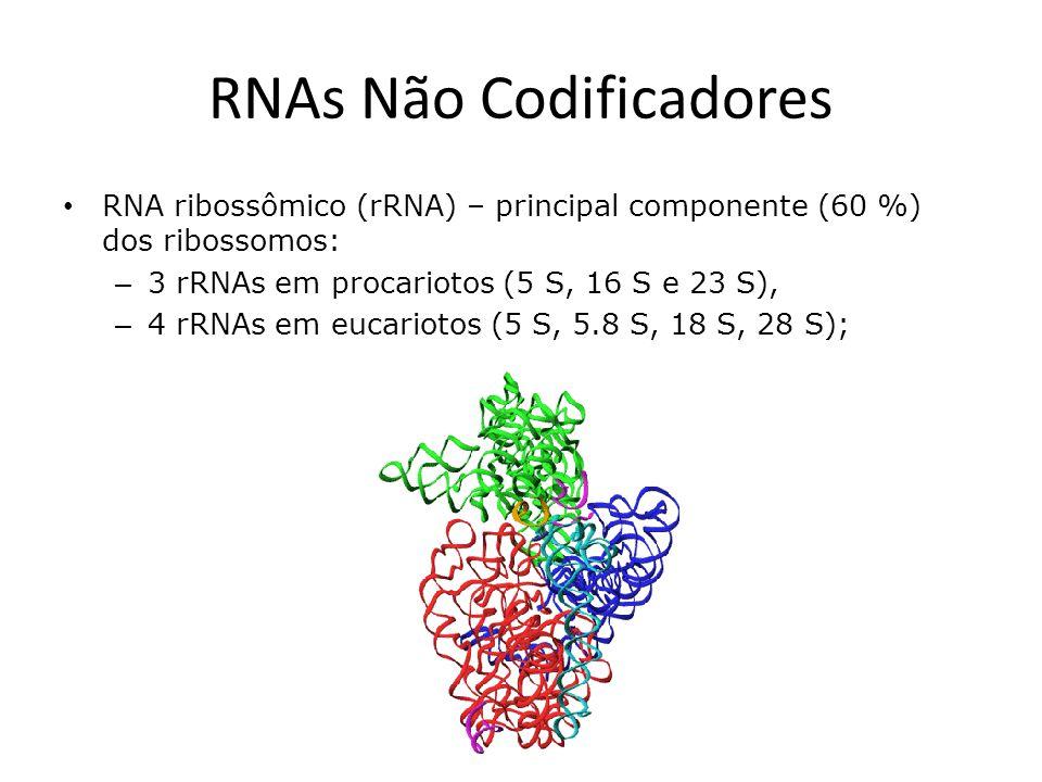RNAs Não Codificadores RNA ribossômico (rRNA) – principal componente (60 %) dos ribossomos: – 3 rRNAs em procariotos (5 S, 16 S e 23 S), – 4 rRNAs em eucariotos (5 S, 5.8 S, 18 S, 28 S);