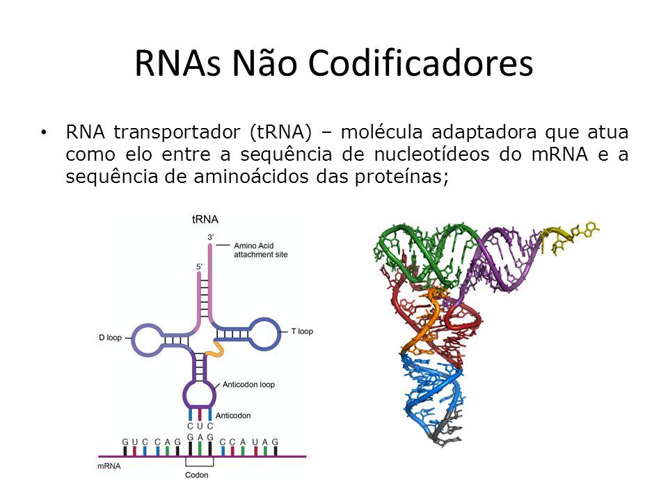 RNAs Não Codificadores RNA transportador (tRNA) – molécula adaptadora que atua como elo entre a sequência de nucleotídeos do mRNA e a sequência de aminoácidos das proteínas;