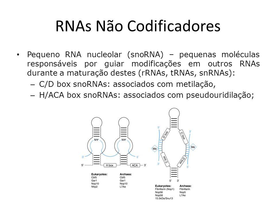 RNAs Não Codificadores Pequeno RNA nucleolar (snoRNA) – pequenas moléculas responsáveis por guiar modificações em outros RNAs durante a maturação destes (rRNAs, tRNAs, snRNAs): – C/D box snoRNAs: associados com metilação, – H/ACA box snoRNAs: associados com pseudouridilação;