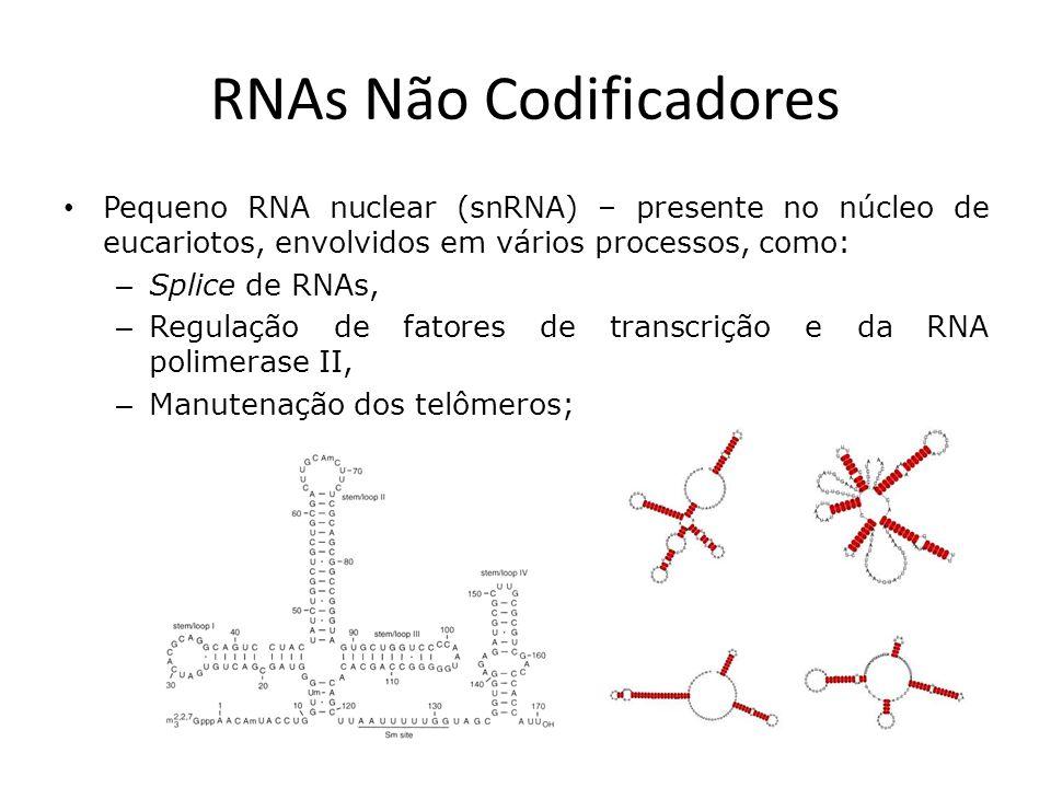 RNAs Não Codificadores Micro RNA (miRNA) – atua na regulação da expressão gênica de eucariotos superiores, um único microRNA pode ter centenas de alvos diferentes: – Mecanismo de complementaridade parcial com mRNAs, geralmente na região 3 UTR, – Atua diminuindo a expressão de seus alvos;