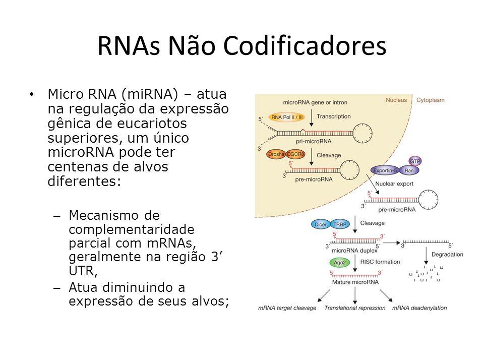 RNAs longos não codificadores Projetos de sequenciamento genômico evidenciaram que o número de genes codificadores de proteínas não muda significativamente entre os vertebrados, nem mesmo os metazoa; O que explica a diferença na complexidade biológica entre esses organismos?