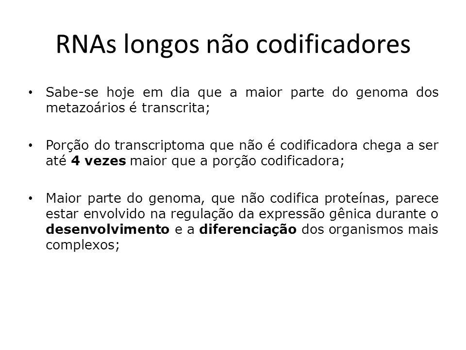 RNAs longos não codificadores Arbitrariamente considerados como sendo transcritos mais longos do que 200 nucleotídeos; lncRNAs se sobrepõem com ou intercalam-se entre outros transcritos codificadores ou não-codificadores;