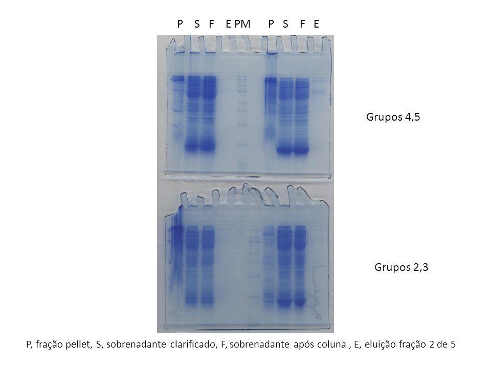 Grupos 4,5 Grupos 2,3 P S F E PM P S F E P, fração pellet, S, sobrenadante clarificado, F, sobrenadante após coluna, E, eluição fração 2 de 5