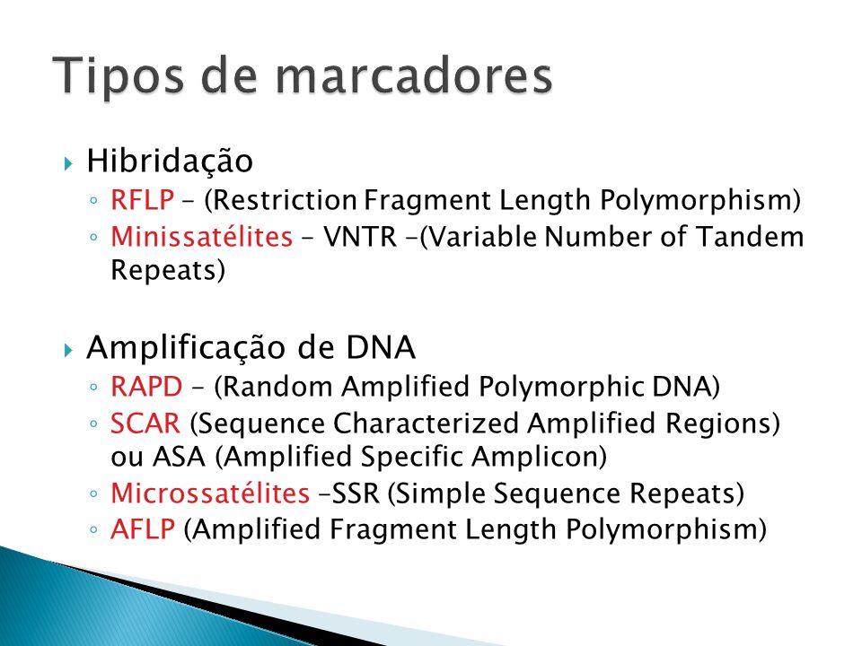Hibridação RFLP – (Restriction Fragment Length Polymorphism) Minissatélites – VNTR –(Variable Number of Tandem Repeats) Amplificação de DNA RAPD – (Random Amplified Polymorphic DNA) SCAR (Sequence Characterized Amplified Regions) ou ASA (Amplified Specific Amplicon) Microssatélites –SSR (Simple Sequence Repeats) AFLP (Amplified Fragment Length Polymorphism)